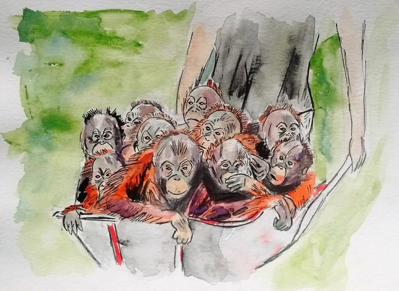 orangutans in a wheelbarrow 4.jpg